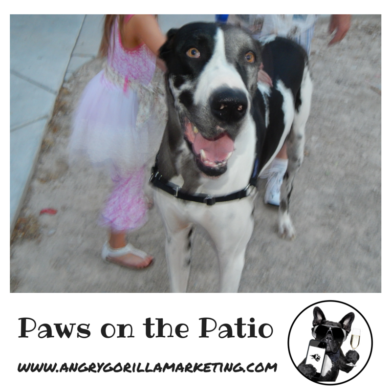 Paws on the Patio Event.png
