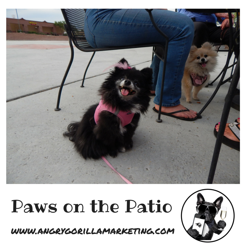Paws on the Patio Event 8.png