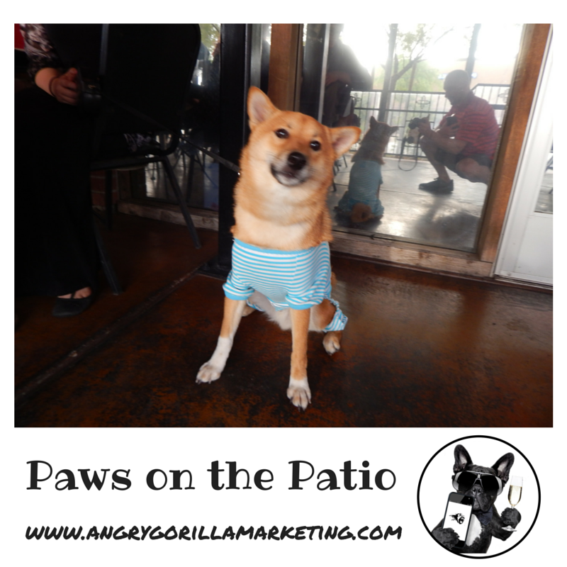 Paws on the Patio Event 7.png