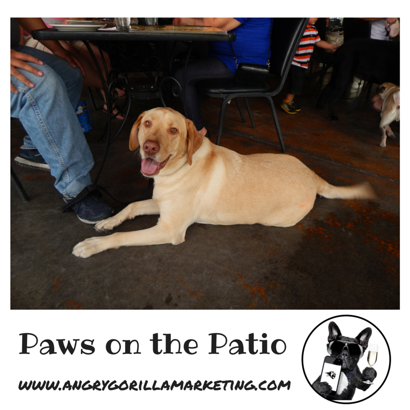 Paws on the Patio Event 17.png