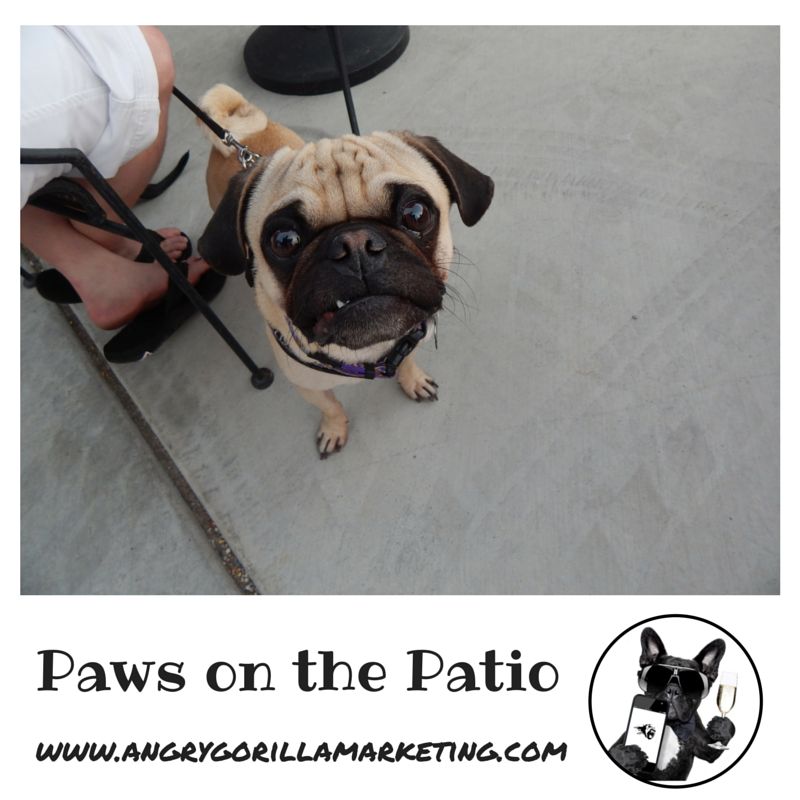 Paws on the Patio Event 1.png