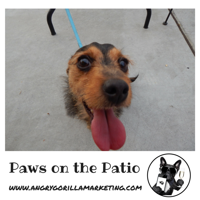 Paws on the Patio Event 16.png