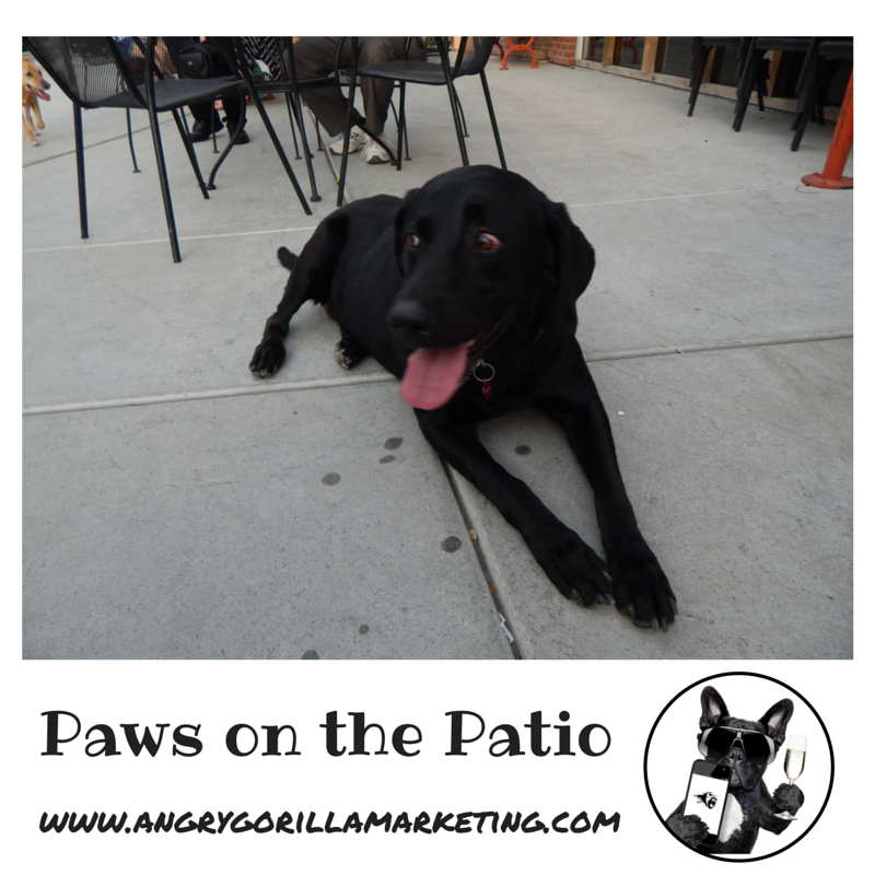 Paws on the Patio Event 12.png