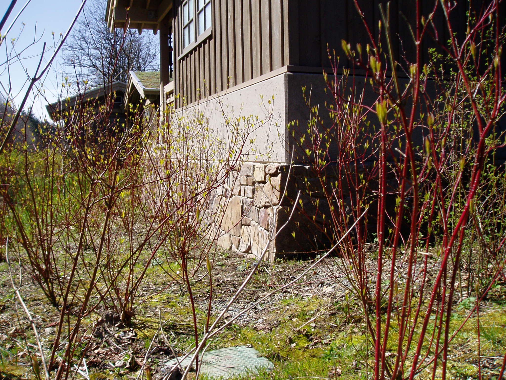 Seattle stone 069