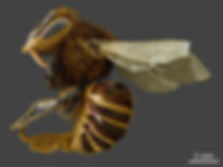 Varro Mite on Bee.jpg