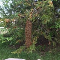 Swarm Tree large