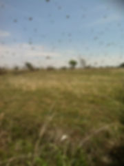 Frontier Country Beekeepers.jpg