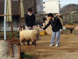 たまには羊(メー)も散歩します