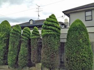 先日、ソフトクリーム売店横の植木を剪定していただきました。