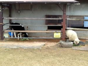 動物達の給餌風景です