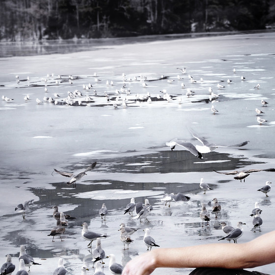 Frozen lake with seagulls