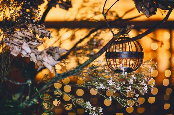 Image by Lumiere Photographic - https://lumierephotographic.com
