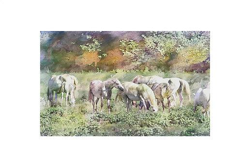 Shawnee Creek Wild Horse Herd - Print
