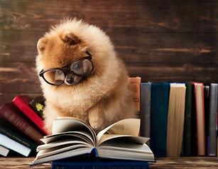 Clever pomeranian dog with a book. A dog
