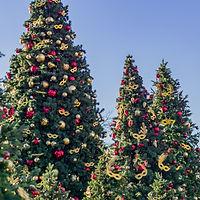Christmas 05 Crop Resize.jpg