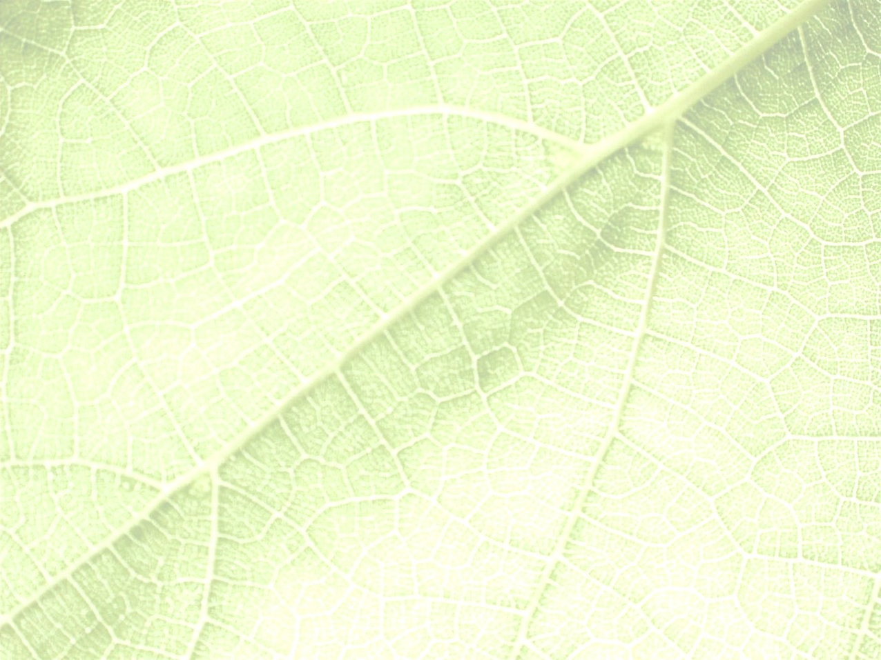 01%20Background%20Leaf_edited.jpg