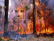 bushfire_665.jpg