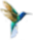 hummingbird_left.png