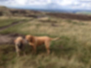 dog walking queensbury dog walking bradford dog walking  brighouse