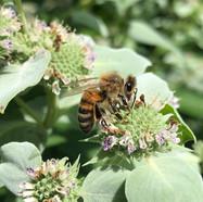 Bee1.jpg