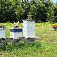 Farm Bee Hives.jpg