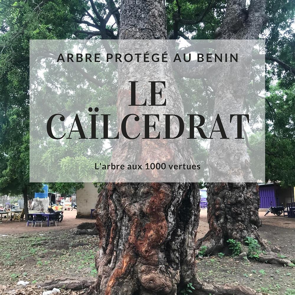 Le caïlcédrat, arbre médicament