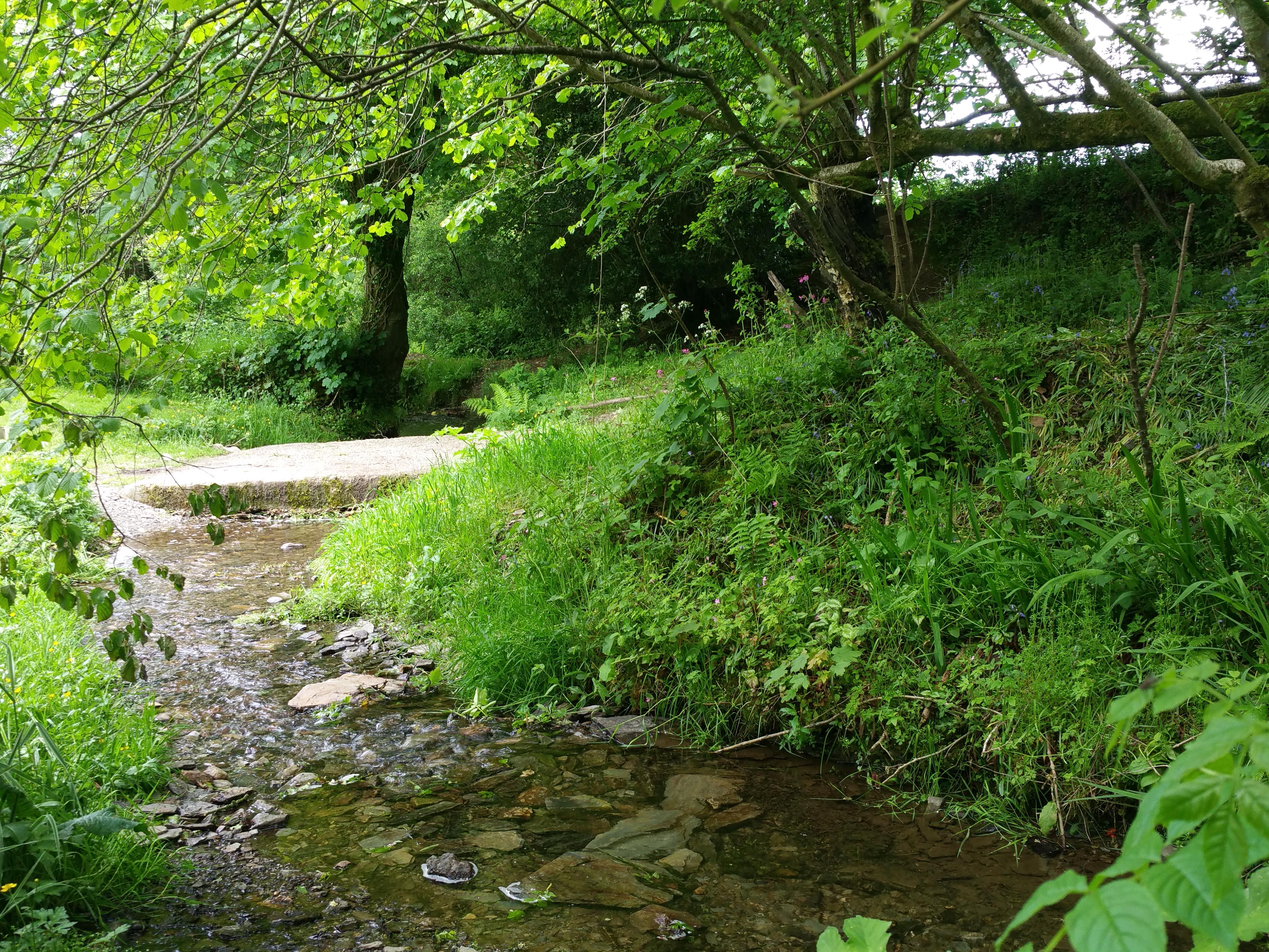 Stream and woodlands