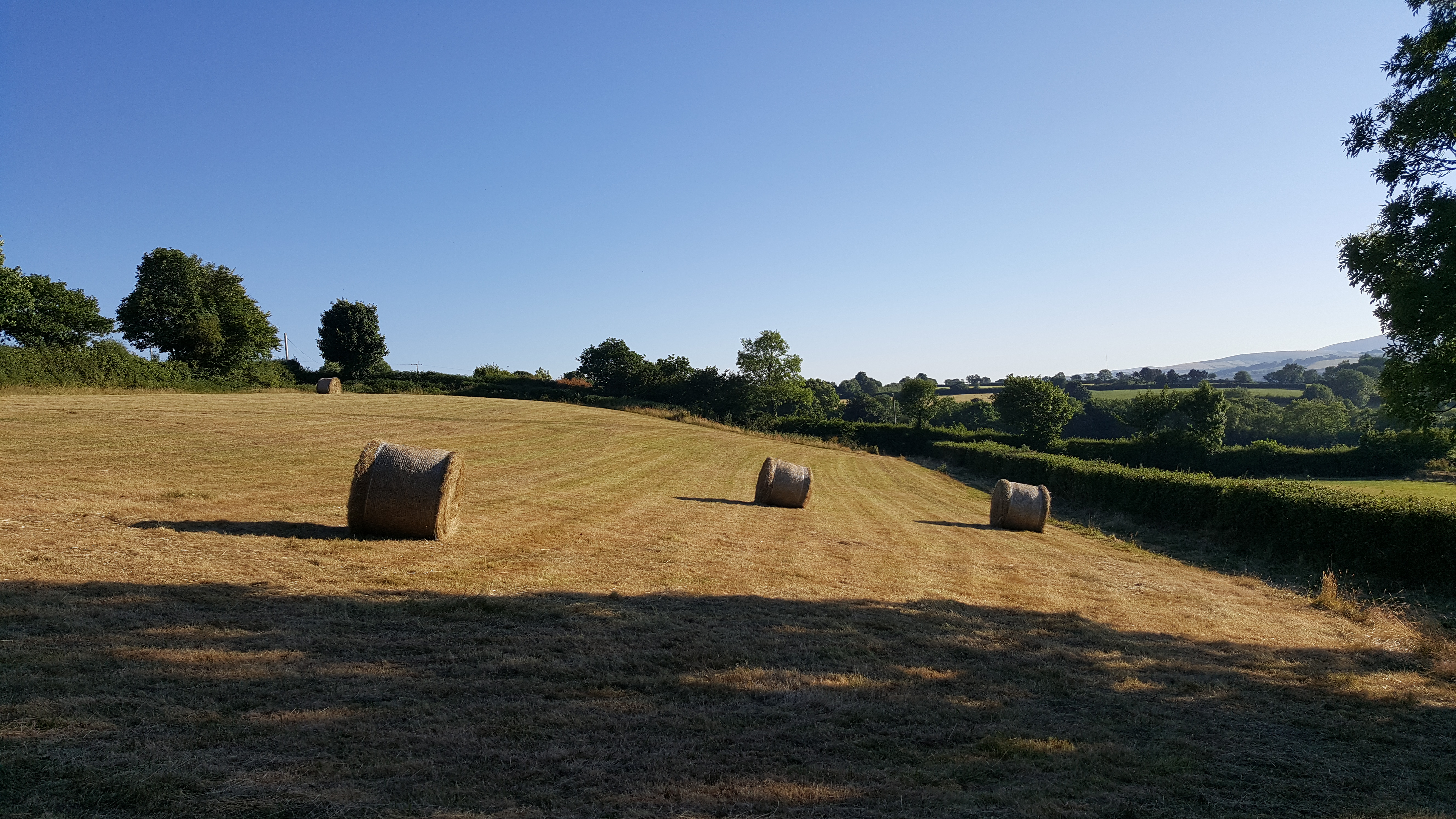 Hay Field (Sunset View)
