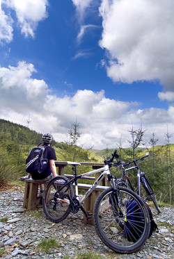 Brechfa Forest, Carmarthen. SA32 7RA