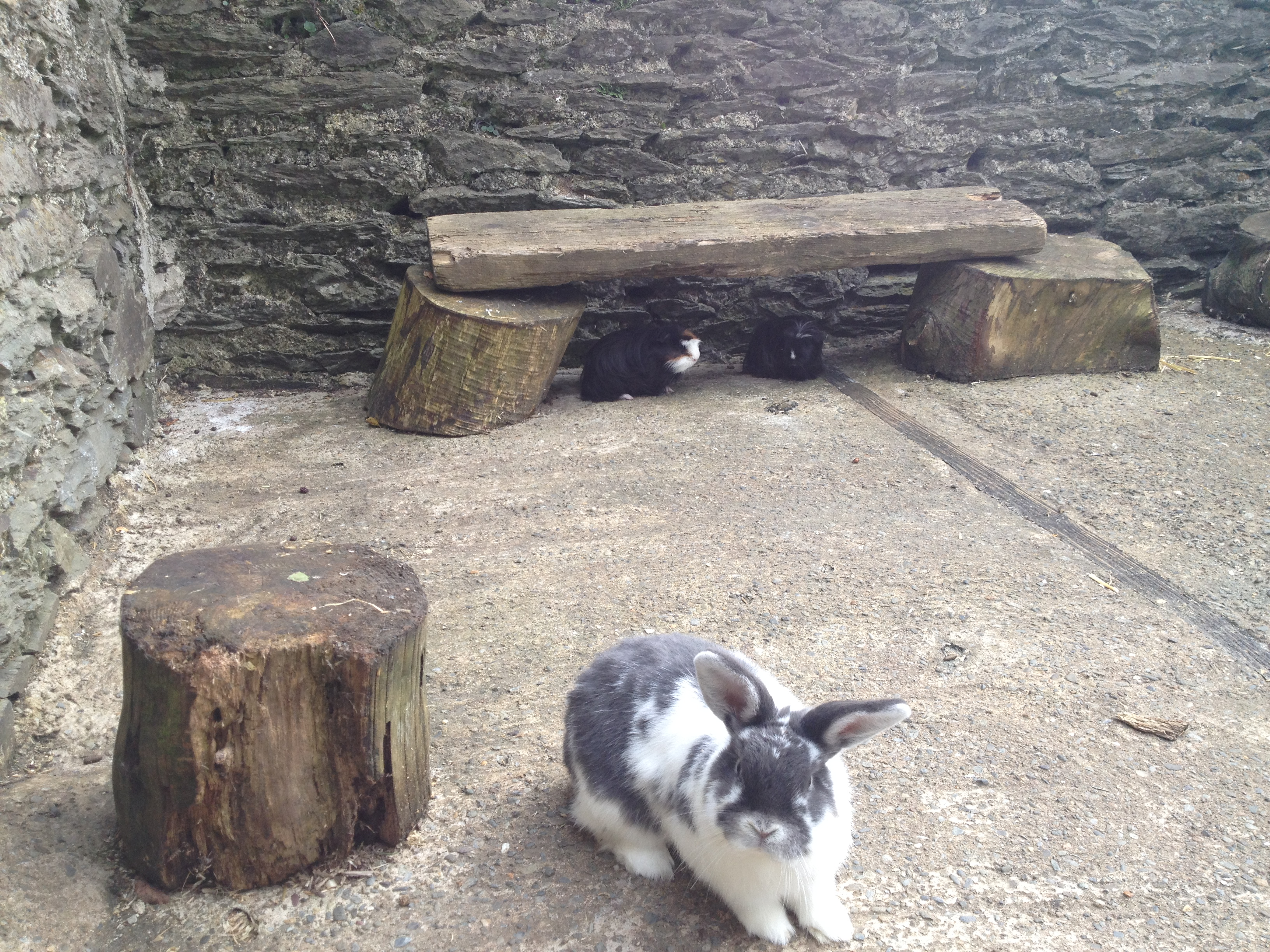 Friendly Rabbits