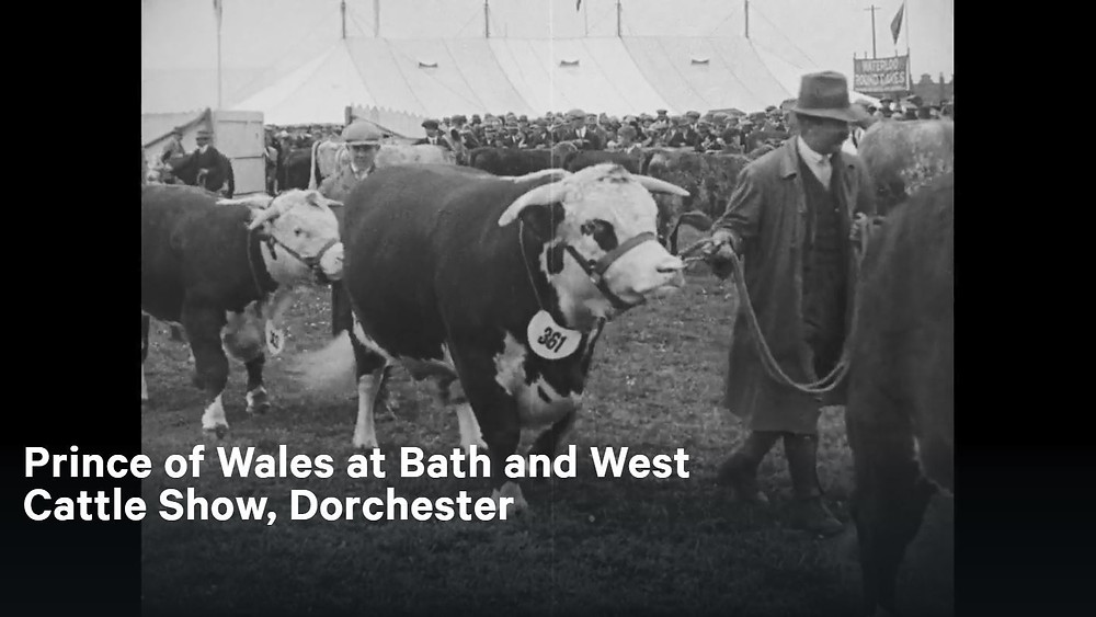 Prince of Wales at Bath and West Cattle Show, Dorchester