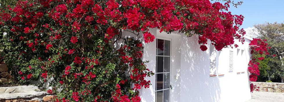 FlowerSpain.jpg