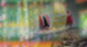 Prestian Office 100x150 - Copy.jpg