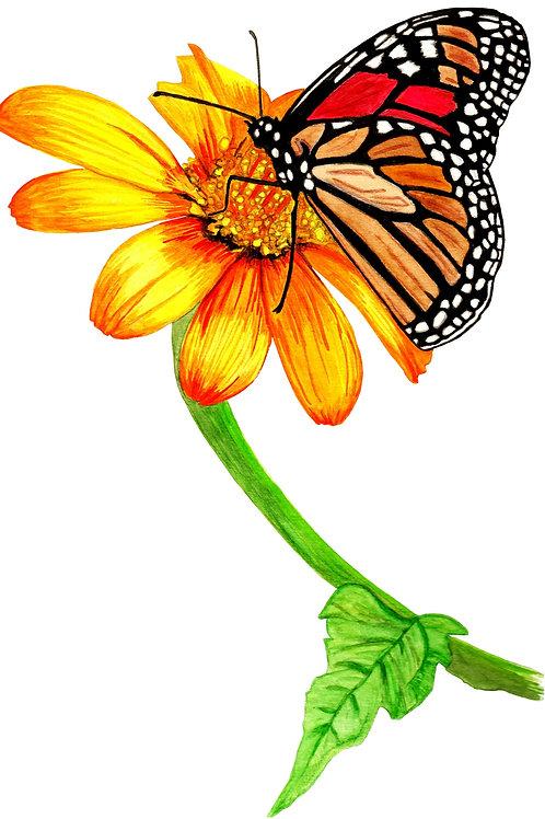 borboletas_02