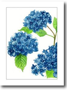 hortensia_azul1.jpg