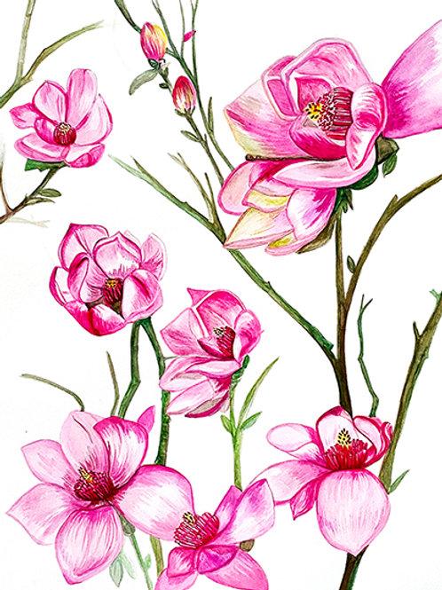 Magnólias rosa