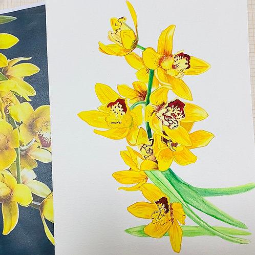 Orquídea amarela_03