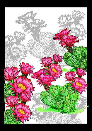 A3_cactus2.jpg