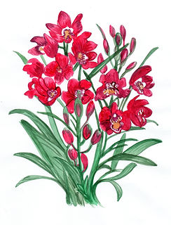 orquidea2.jpeg