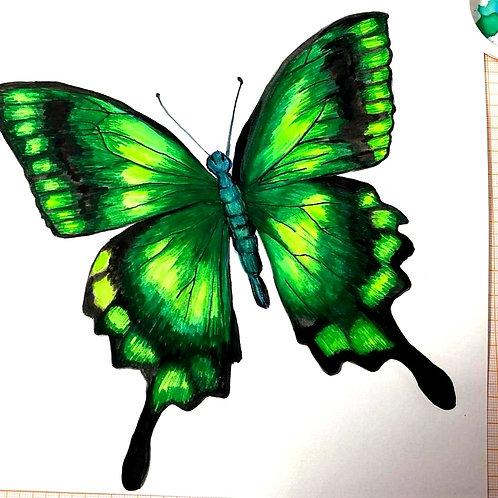 borboletas_04