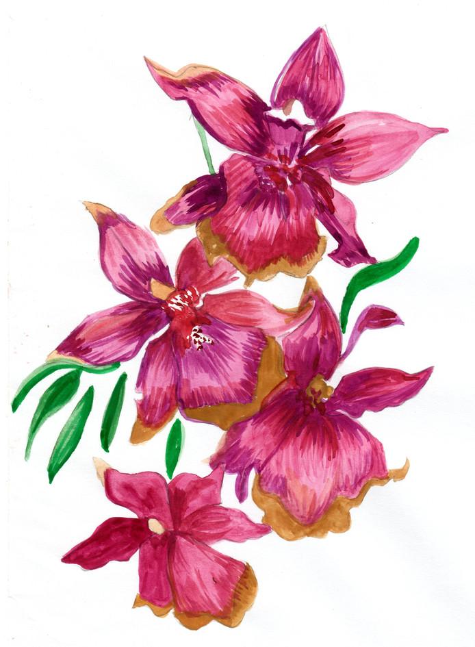 orquidea1.jpeg