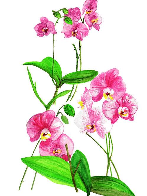 Orquídea Rosa (20X30)
