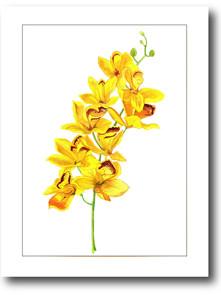 orquideas amarelas_02.jpg
