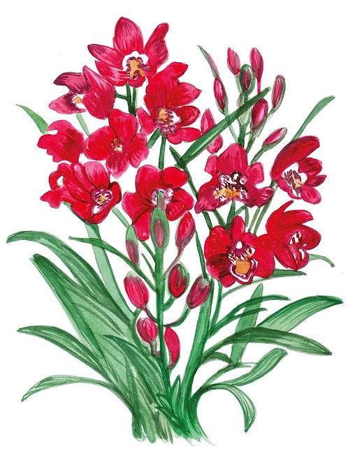 Orquídea vermelha