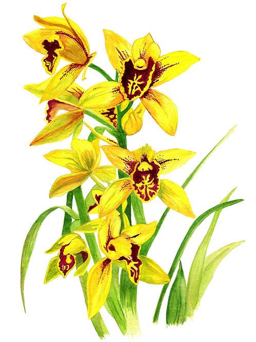 Orquídea Amarela (20X30)