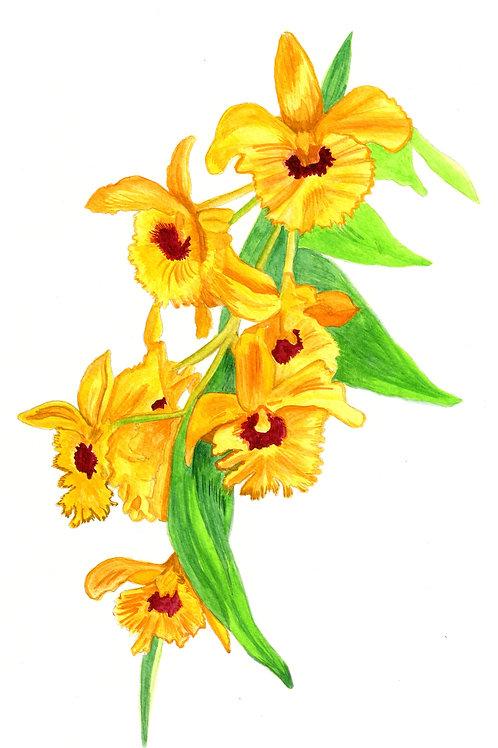 Orquídea amarela_04