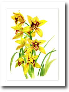 orquideas amarelas_01.jpg