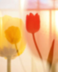 Happy Valentine's Day 🌷☺︎.jpg
