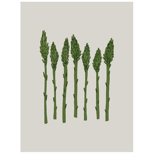 asparagus - grey