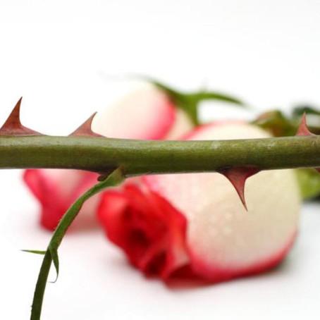 Love Among the Thorns